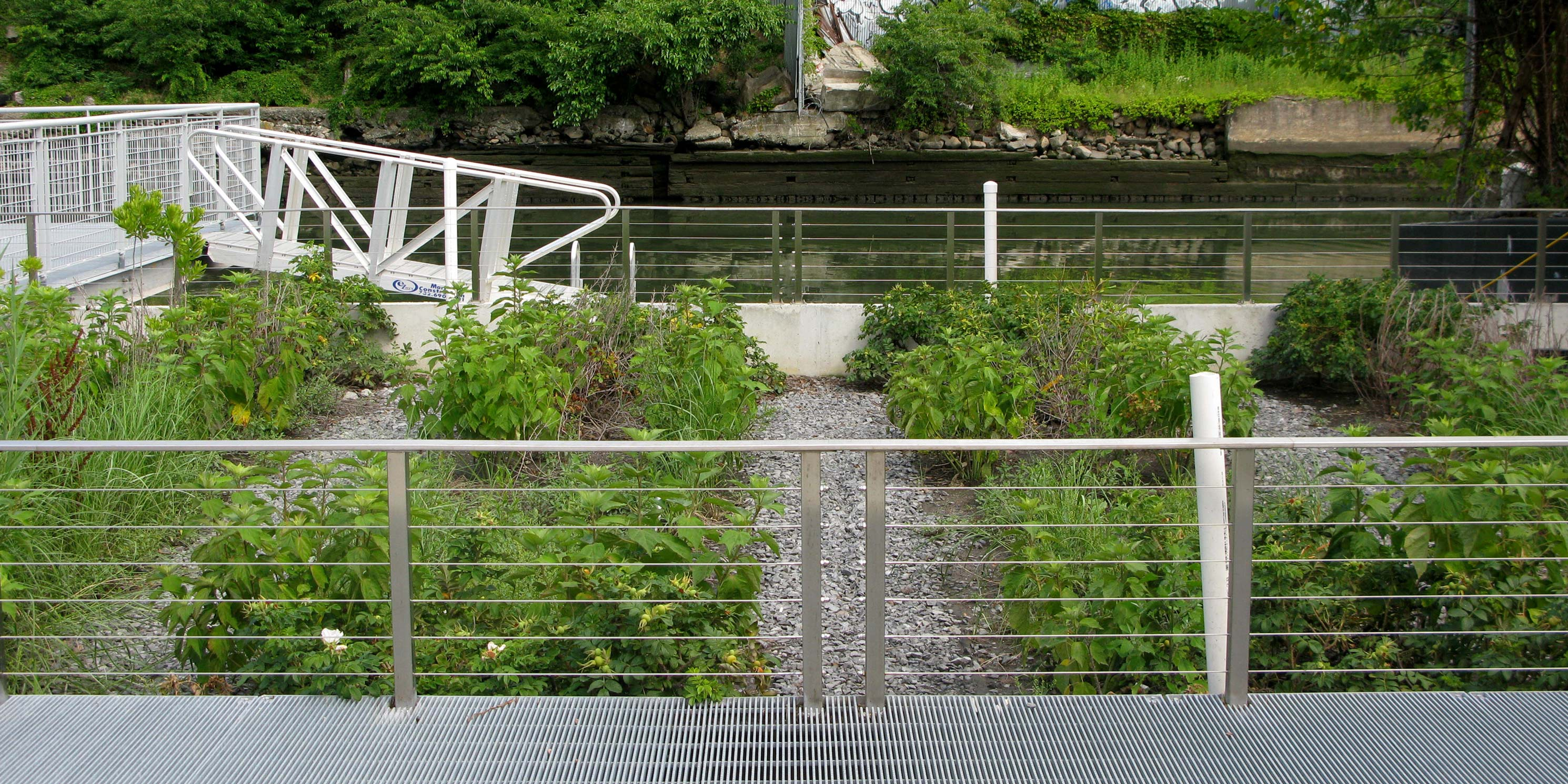 shrub beds at the Gowanus Sponge Park