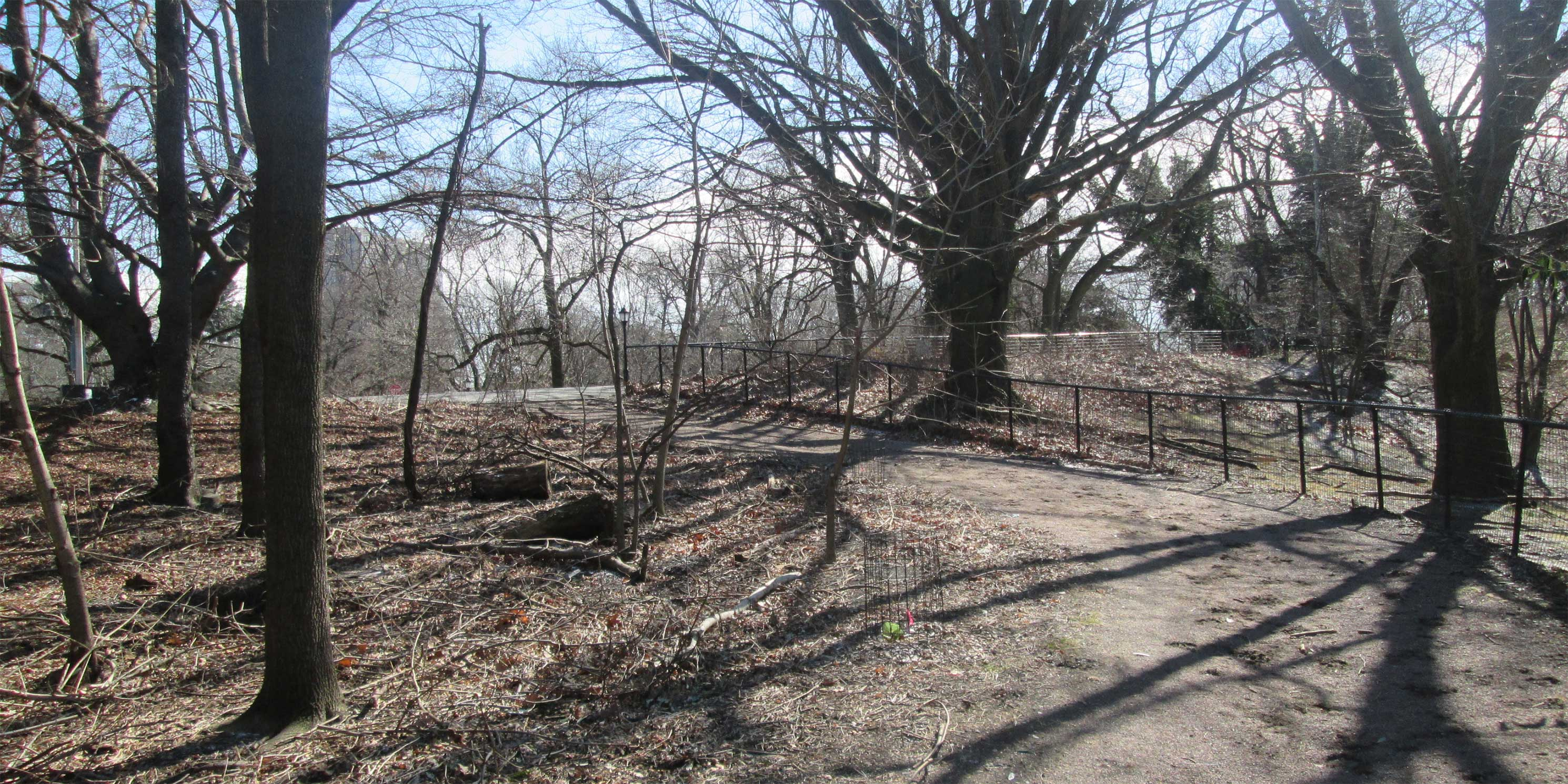 trees and gravel path in Propsect Park, Brooklyn