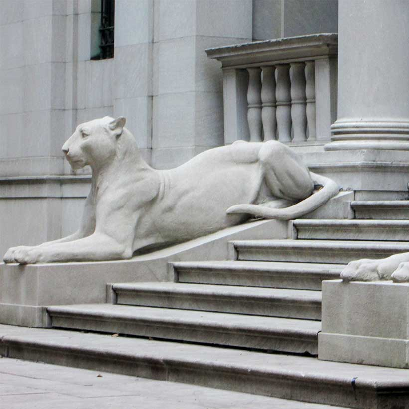 lion statues outside the Morgan Library and Museum